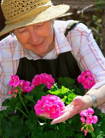 Old lady tending roses
